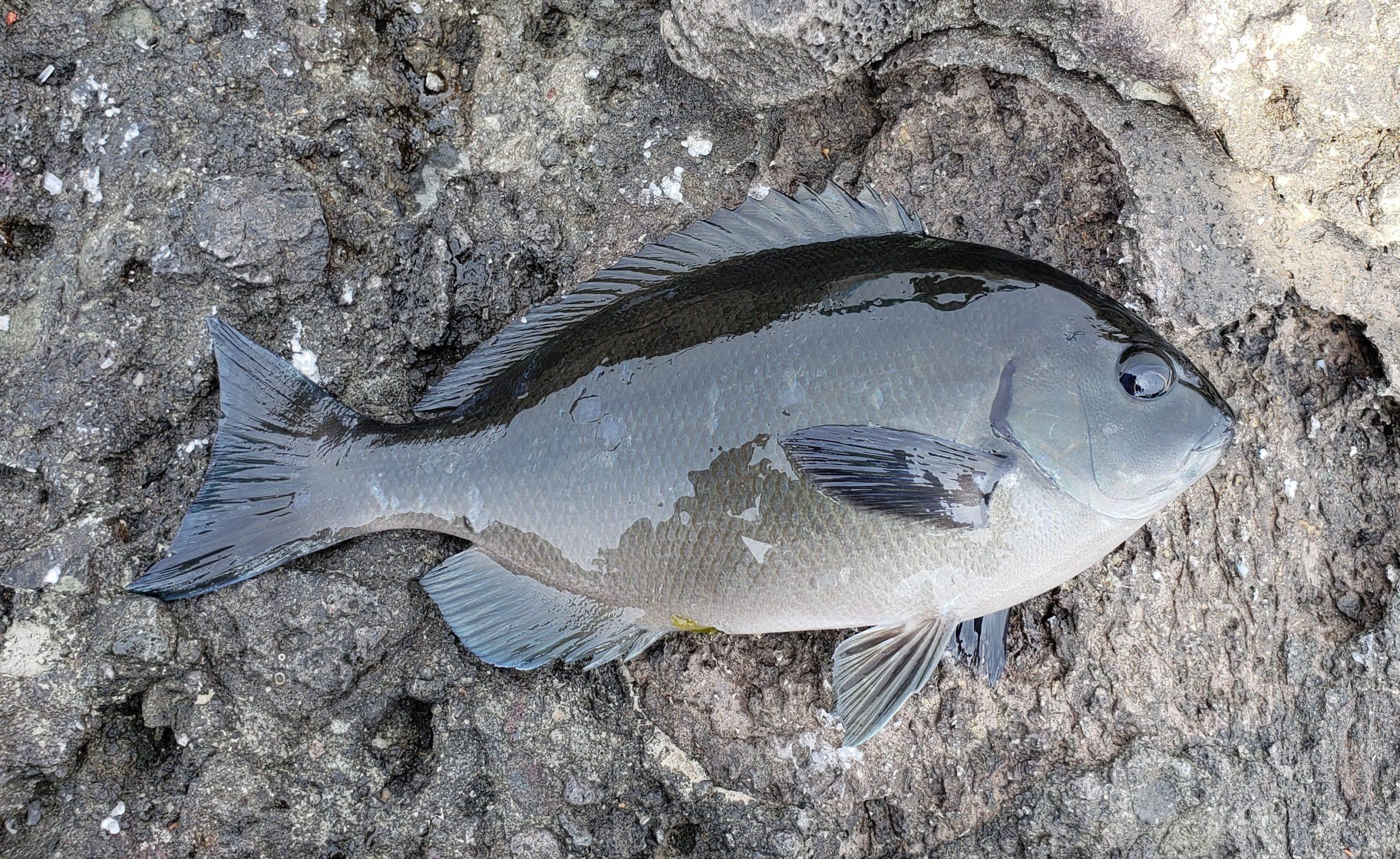 釣りの穴場を見つける方法