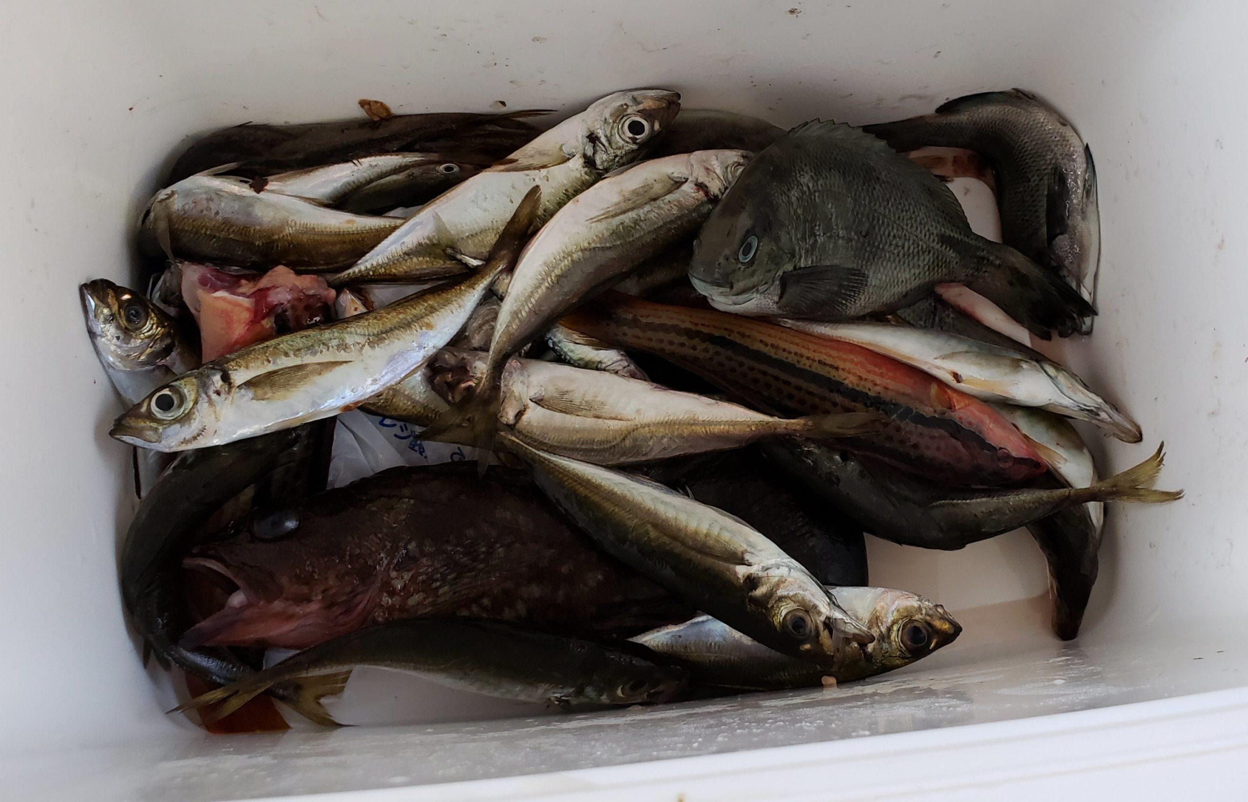 海釣りでボウズを避けるコツ