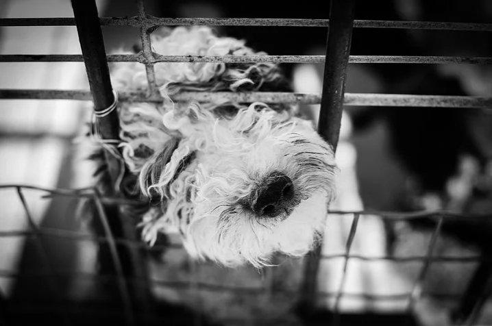 ペットホテルでストレスを感じやすい犬の特徴とは?