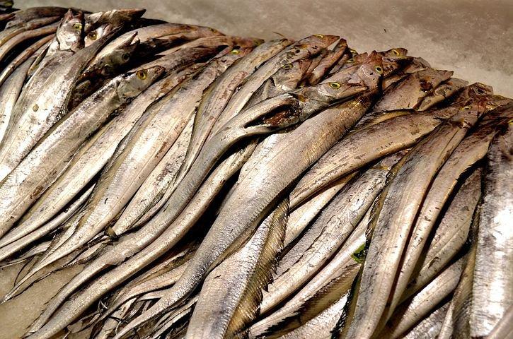 タチウオを堤防から釣るならルアーが良いのか